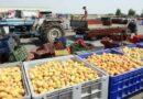 Αυξημένες οι εξαγωγές φρούτων και λαχανικών – Πρώτο δίμηνο του 2021