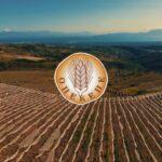 AgroPublic | opekepe logotypo