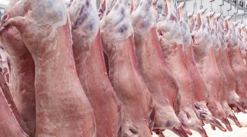photo 742572805 lambs