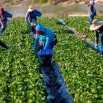 εργάτες γης 1