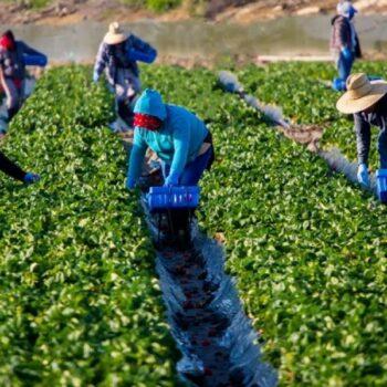AgroPublic | εργάτες γης 1