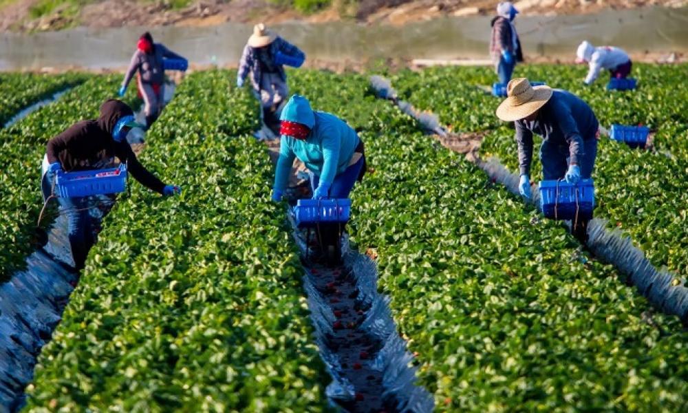AgroPublic   εργάτες γης 1
