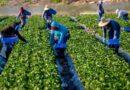Εργάτες γης: Πώς θα γίνει η μετάκληση πολιτών τρίτων χωρών