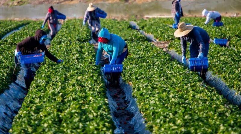 εργάτες γης