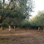 AgroPublic   Elia home