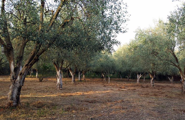 AgroPublic | Elia home