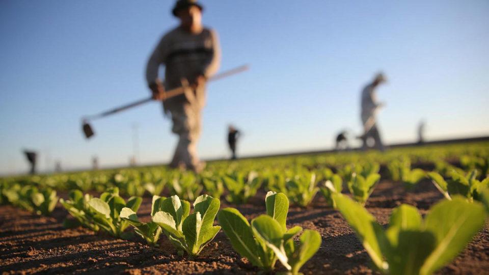 AgroPublic | agriculture 01