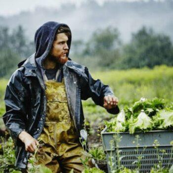 AgroPublic | agrotes neoi