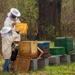AgroPublic | beekeepe