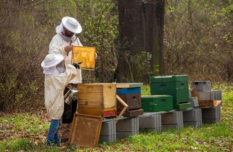 AgroPublic   beekeepe
