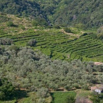 AgroPublic | dasikoi hartes