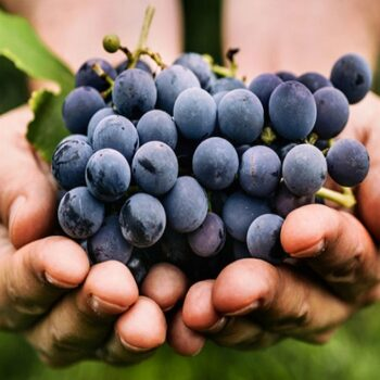 AgroPublic | grapes 0208