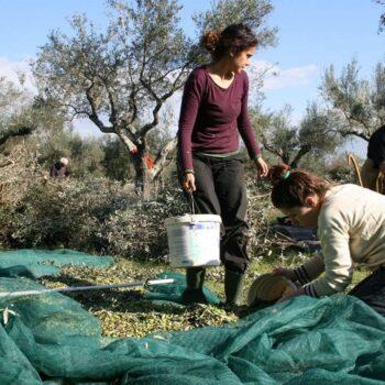 AgroPublic | h apasxolisi ston agrotiko tomea kai oi dimografikes taseis stin ipaithro