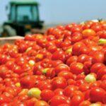 AgroPublic   khpeytika 1
