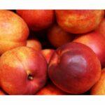 AgroPublic | nektarinia 1294626511