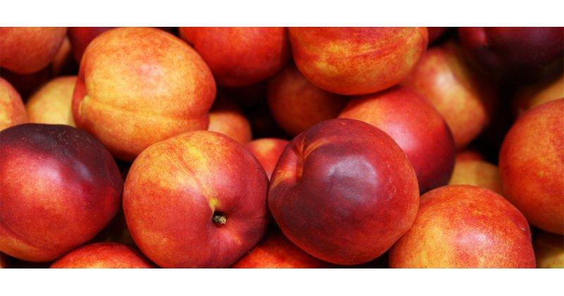 AgroPublic   nektarinia 1294626511