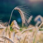 AgroPublic | sitari.613