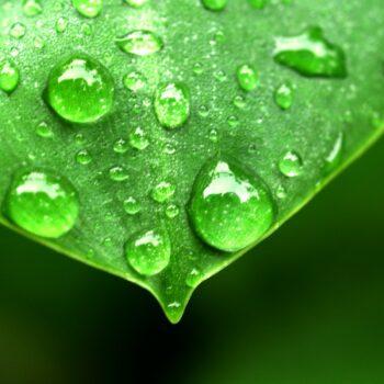 AgroPublic | water drop on leaf 1639192