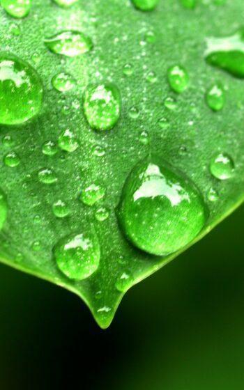 AgroPublic   water drop on leaf 1639192