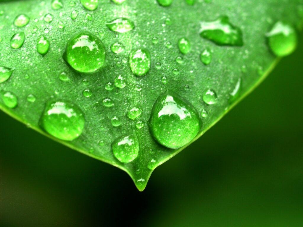 AgroPublic | water drop on leaf 1639192 scaled