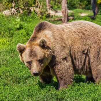 AgroPublic | bear 422682 1280