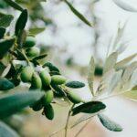 AgroPublic | elia elies ladi