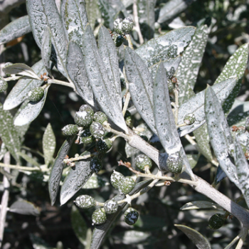 AgroPublic | kaolinite2