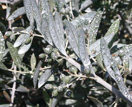 AgroPublic   kaolinite2