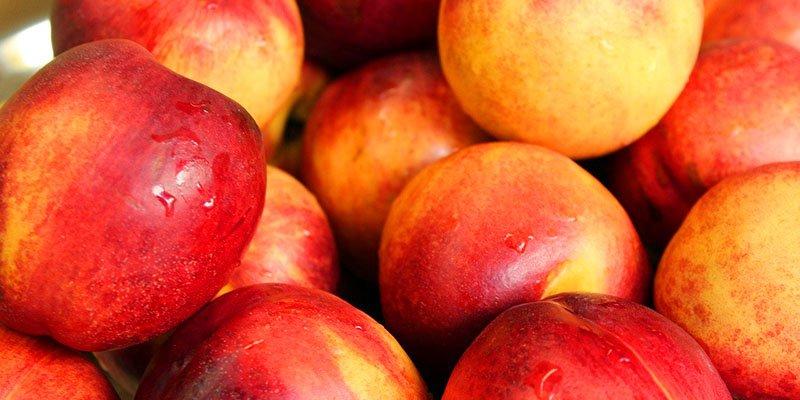 AgroPublic   nektarini poia diatrofiki aksia