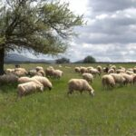 AgroPublic | voskotopia