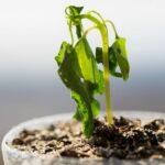 AgroPublic | Προστασία φυτών από τη ζέστη 1
