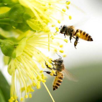 AgroPublic   Honeybees