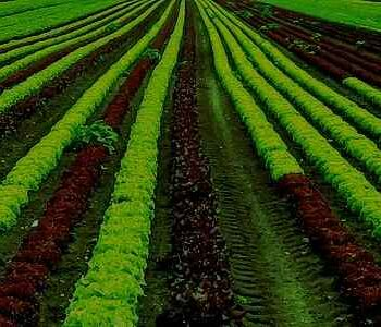 AgroPublic | Kalliergeie