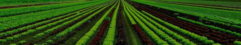 AgroPublic | Kalliergeie scaled