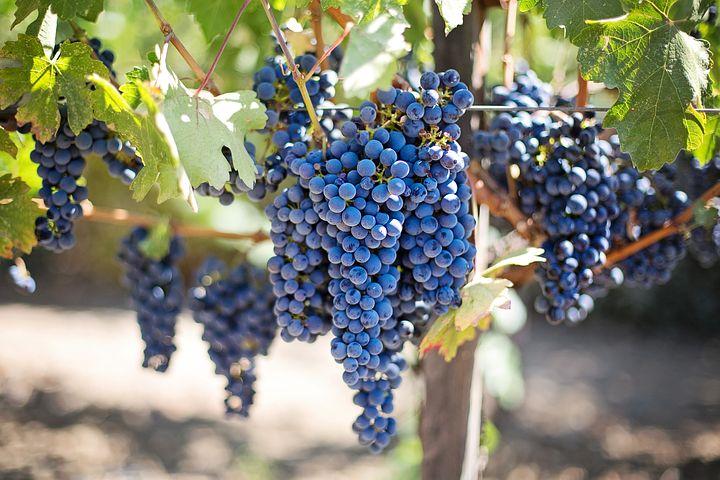 AgroPublic | grape