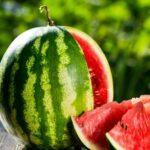 AgroPublic | karpouzi