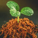 AgroPublic | mycorrhizal funghi roots