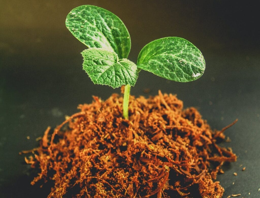 AgroPublic   mycorrhizal funghi roots scaled