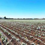 AgroPublic | pagetos