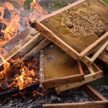 AgroPublic   afb fire