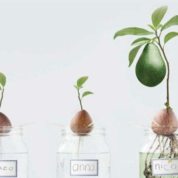 AgroPublic | grow avocado doctvgr 01