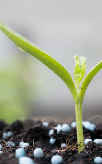 AgroPublic   promix greenhouse growing young plant closeup